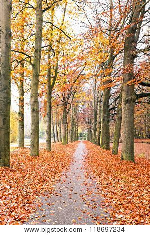 Fall in the countryside from the Netherlands