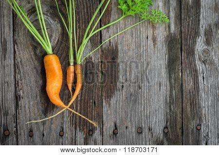 Ugly Baby Carrot On Barn Wood