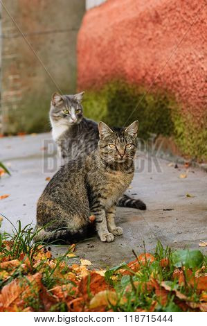 Two stray cats in Autumn outdoor