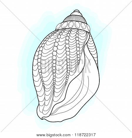 Zentangle Seashell Collection