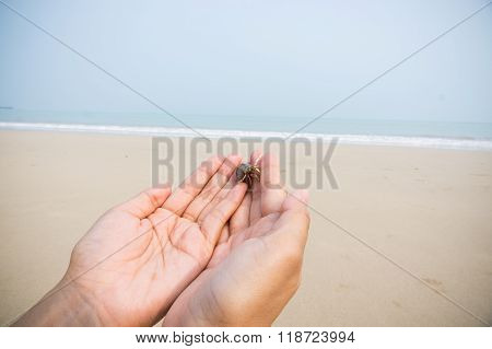 Hermit Crab On Hand Over Beach