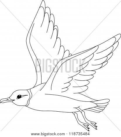 Ross's Gull Coloring Page