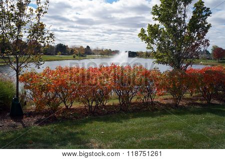 Shining Sumac Bushes in Autumn