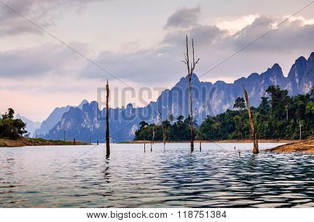 Skeleton Trees In Water At Dusk, Khao Sok National Park