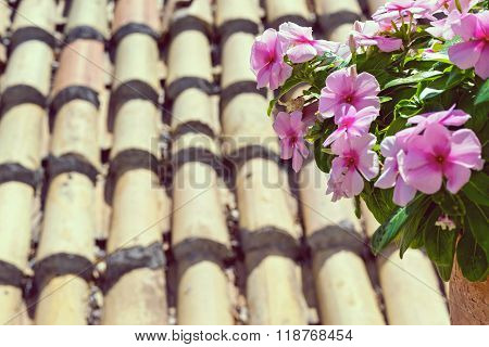 Bunch Of Red And Lilac Flowers Against An Old Roof