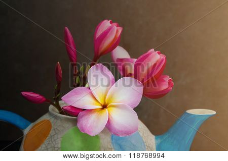 Lovely Plumeria Flower In Colourful Tea Pot