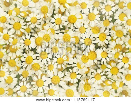 Closup of small daisy flowers bouquet for background
