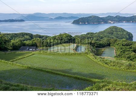 Paddy field and strait