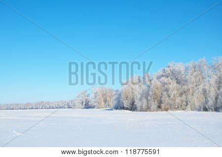 Winter Forest Tundra Landscape With Clean Blue Sky