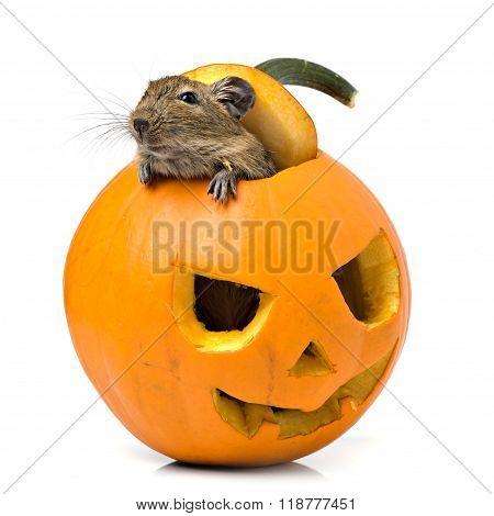 Halloween Pumpkin Mouse