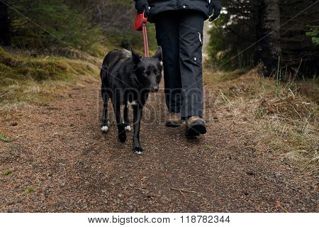 Owner takes pet dog out for a walk in the forest park outdoors nature, best friend companion