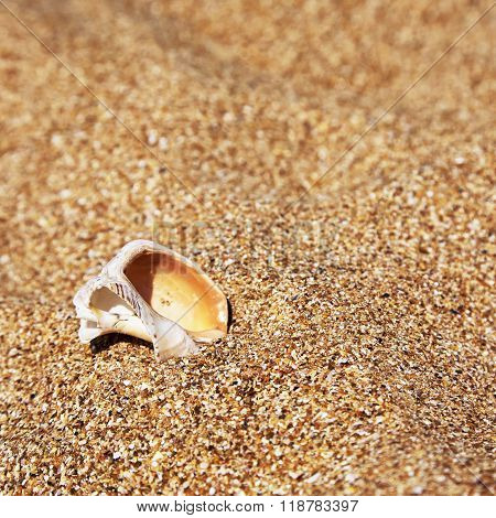 Conch Shell over sand