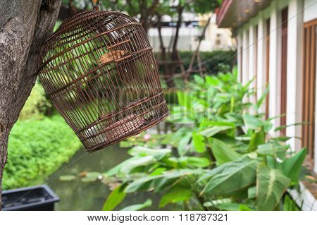 Birdcage Hanging On The Tree