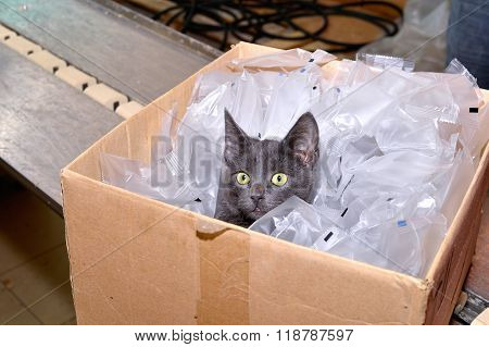 Black Cat Sitting In A Cardboard Box Including Packing Bags Factory