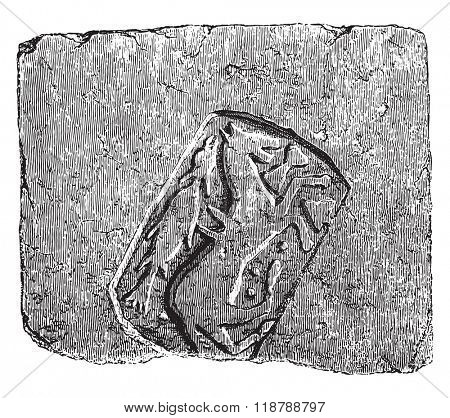 Fireclay tile very hard, found in excavations of the abbey of Sainte Colombe les Sens, Yonne, Ninth century, vintage engraved illustration. Magasin Pittoresque 1873.