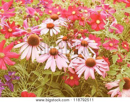 Retro Looking Daisy Flower