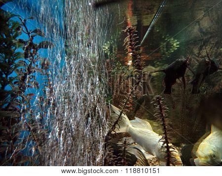 Air bubbles in the aquarium