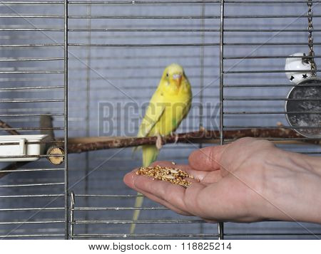 Grains For Parrot