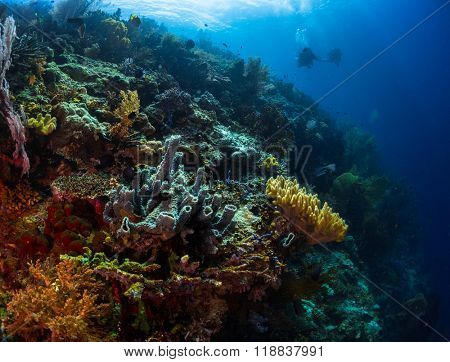 Coral reef in a tropical sea