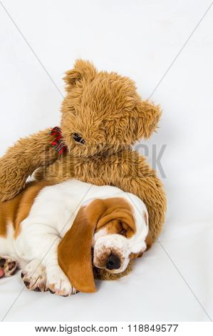 Teddy Bear Comforts Sleeping Puppy