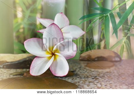 Plumeria Or Frangipani On Water And Pebble Rock With Bamboo Tree