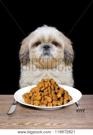 Dog Is Hungry And Is Going To Eat