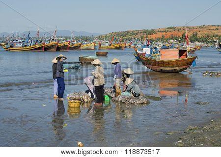 Women sort the fish catch in the harbour of Mui Ne. Vietnam