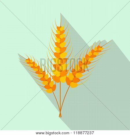 Three stalks of ripe barley flat icon