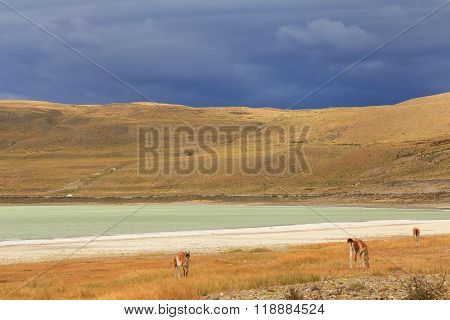 Dramatic clouds, green lake and Llamas in yellow field.
