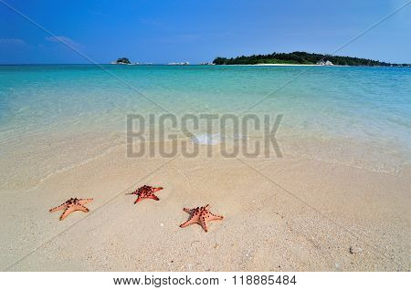 Three Starfishes