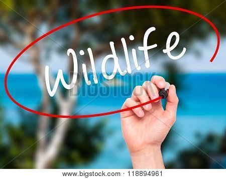 Man Hand Writing Wildlife  With Black Marker On Visual Screen