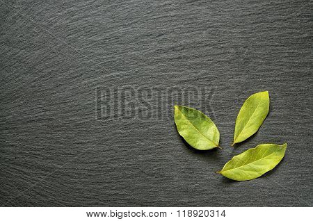 Semi Dried Bay Laurel Leaves On Black Slate Stone With Copy Space For Text As Template Food Backgrou