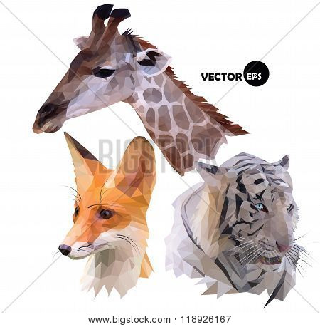 set of portraits of wild animals a giraffe, white tiger, red Fox realistic in polygonal ,low poly or