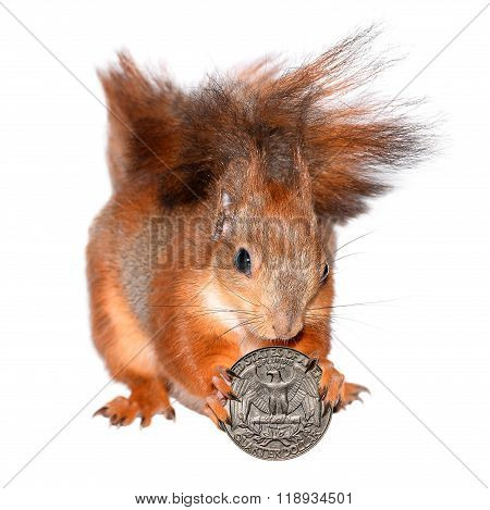 Squirrel with  coin isolated on white
