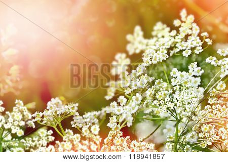 Summer Landscape With Wildflowers