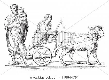 Goat hitched, vintage engraved illustration. Magasin Pittoresque 1878.