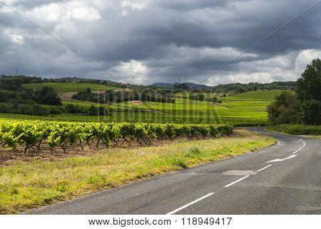 Vineyard Near Carcassonne (france)