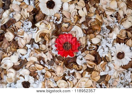 Dried Red And White Daisies With Leaves Background