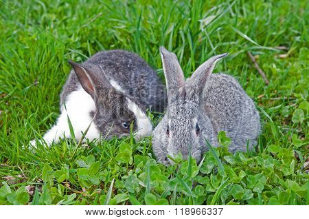 Two Rabbit