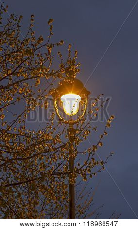 Single Old-fashioned Lantern In The Branches Of A Tree