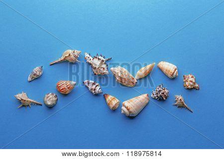 Frame shaped seashells on turquoise background