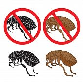 Постер, плакат: Flea Danger Sign Flea And Hygiene Stock Flea Picture A Flea Symbol Vector Flea In The Sign