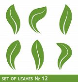 stock photo of olive branch  - Illustration of leaves set for design  - JPG