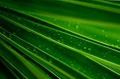 pic of green leaves  - greens - JPG