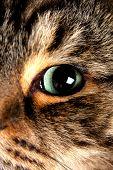 Постер, плакат: Красивая кошачий глаз