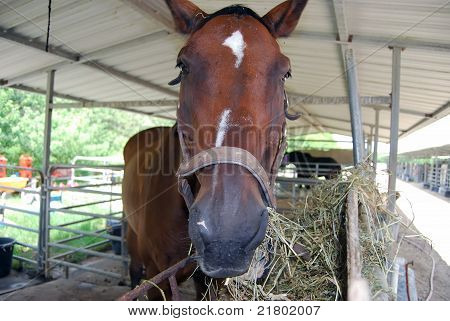 Portrait of an Abandoned Racehorse