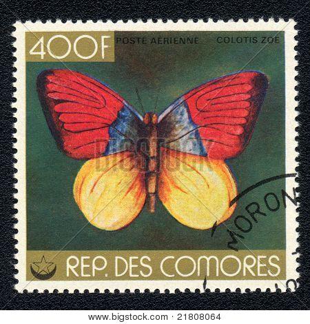 Butterfly Aerienne Colotis Zoe