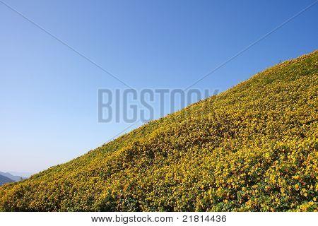 Mountain Bua_tong