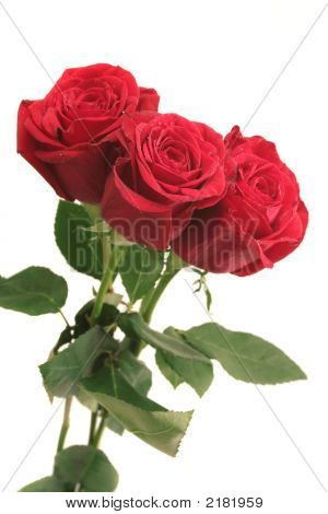 Three Beautiful Red Roses On A White Background