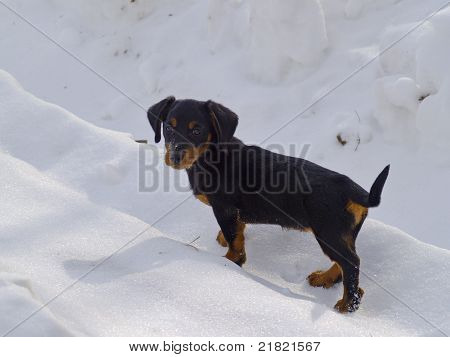Puppy Of A Dog On Snow-covered Road